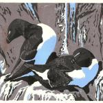 """Razorbill Ledge."" Linocut reduction block print, 2014. 6 x 8 inches. EDITION OF 20, ORIGINALS AVAILABLE. $200 UNFRAMED."