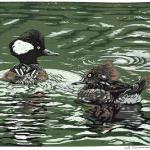 """A Real Flair"" (Hooded Mergansers). Linocut reduction print on paper, 2019. 12 x 9 inches."