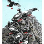 """Red Rainboots"" (Pigeon Guillemots). Linocut reduction print, 2020. EDITIONS OF 10, ORIGINALS AVAILABLE. $250 UNFRAMED."