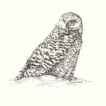"""Snowy Owl."" Pen and ink on paper, 2008. 8.5 x 11 inches."
