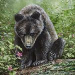 """Uncertainty"" (brown bear cub). Oil on canvas-covered panel, 2019. 11 x 14 inches. ORIGINAL AVAILABLE, $1020 FRAMED."